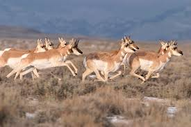 Nevada wild animals images Dealing with wildlife in the desert of california nevada in jpg