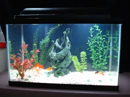 Types Of Aquarium Fish A Guide To Finding The Best 10 Gallon Fish Tank For You