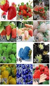 free shipping 12 kinds of font b strawberry b font seeds red blue green yellow white jpg