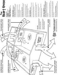 heart anatomy coloring sheet teaching supplementary material