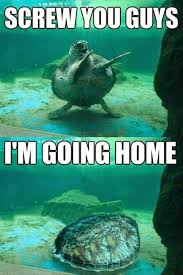 Turtle Memes - funny going home turtle funny things pinterest turtle