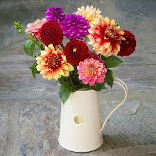dahlias for cutting u003cbr u003e6 tubers white flower farm