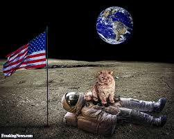 cat on the moon pictures freaking