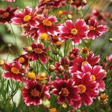 Summer Gardening - 7 perennial flowers that add color to your summer garden martha