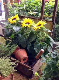 fascinating facts about sunflowers flowers blog flowers tips