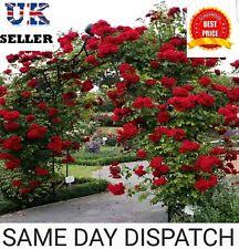 Wedding Arch Ebay Uk Rose Buy Rose Plants U0026 Garden Bushes Ebay