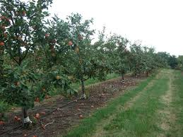 pictures of apple farm before you start an apple orchard