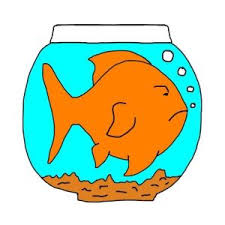 Goldfish Bowl Vase 12 Mistakes New Goldfish Keepers Make