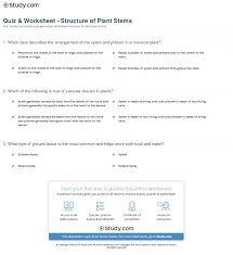 quiz u0026 worksheet structure of plant stems study com