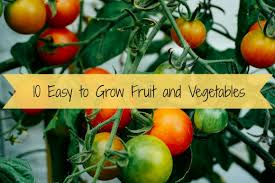 Vegetables You Can Regrow by 10 Fruits U0026 Vegetables That Regrow Every Year Gypsy Soul