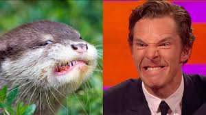 Cumberbatch Otter Meme - benedict cumberbatch s resemblance to an otter the graham norton