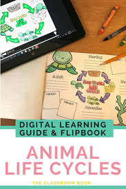 42 best animal writing images on pinterest teaching ideas