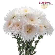 Artificial Flowers In Vase Wholesale Wholesale Mums U0026 Spider Mums U2013 Bloomsbythebox Com