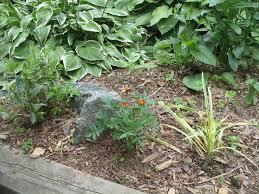 design a perennial garden garden guides