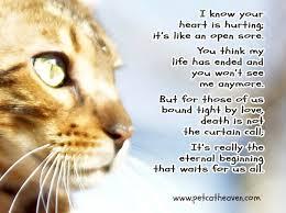 pet prayer grieving cat pictures search pinteres