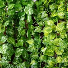 ivy home decor 12pcs 6 5ft artificial wall hanging ivy vine foliage leaf garland