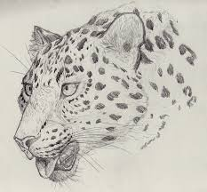sketch a day day 3 amur leopard by therecurrent on deviantart