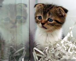 Sad Kitten Meme - i are sad kitten funnykittensite com