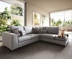 gatti divani il divano per il e per il gatto