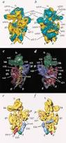 structure of the 80s ribosome from saccharomyces cerevisiae u2014trna