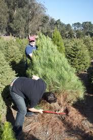 to make rustic nailhead s hgtv how christmas tree cutting to make