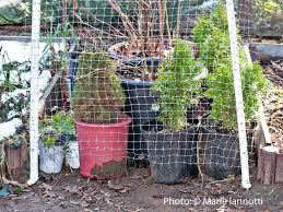 winterizing container plants
