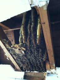 Hive Homes by Veteran Owned Live Honey Bee Removal Wildlife Abatement Llc