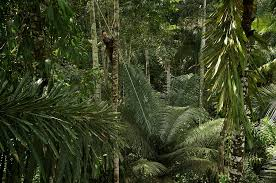 canopy amazon canopy chemistry is a patchwork quilt