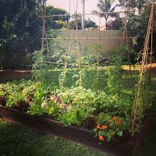 Fruit Garden Layout Planting Organic Vegetables Herbs And Fruits In South Florida