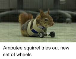 Dramatic Squirrel Meme - overly dramatic squirrel 100 images lookalike overly dramatic