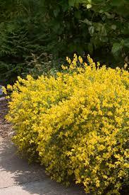 native drought tolerant plants 37 best drought tolerant plants images on pinterest flower