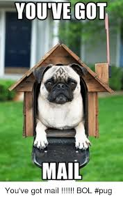 Mail Meme - you ve got mail you ve got mail bol pug meme on me me