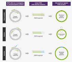 bureau de la pcr pcr applications top seven categories thermo fisher scientific