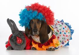 The Cutest Halloween Costumes For Pets Margaritaville Blog