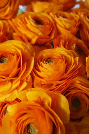 Yellow Orange Flowers - 69 best orange flowers images on pinterest orange flowers