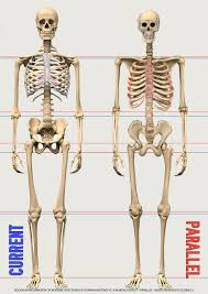Anatomy Of The Shoulder Girdle Old Skeleton Residue On Carbonaro Effect Episode Mandelaeffect