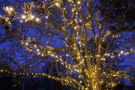 how to string lights on a tree light wrapped trees for a fun spring and summer christmas lights