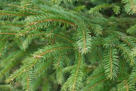 5 tips for cutting your own christmas tree at wilcox tree farms