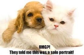Cat And Dog Memes - 25 most adorable dogs with cats memes