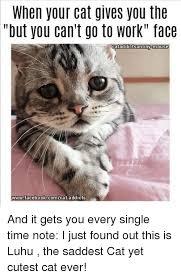 Cute Cat Meme Generator - 25 best memes about memes memes meme generator