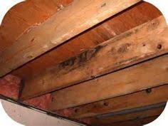 White Mold In Basement Dangerous by How To Kill White Mold On Wood White Mold In Basement White