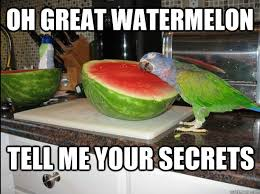 Grass Memes - oh glorious watermelon tell me your secrets grass know your meme