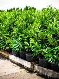 buy trees with free shipping the tree center