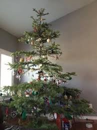 How To Decorate A Real Christmas Tree Are You Getting A Real Christmas Tree Or Artificial Tree This Year