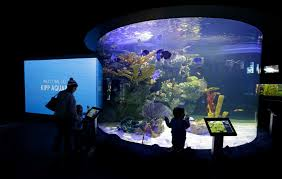 Zoo Of Lights Houston by Houston Zoo Shows Off Newly Remodeled Aquarium Houston Chronicle