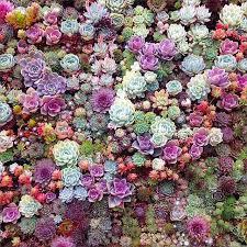 succulent city wow my garden your garden crafts pinterest