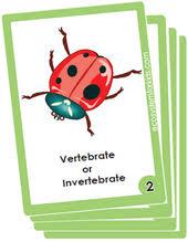 1st grade science flash cards for kids pdf