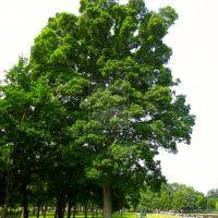 fascinating garden decoration with good privacy trees u2013 coolhousy
