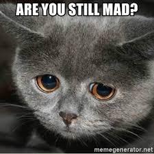 Mad Cat Memes - you still mad cat lekton info