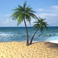 8 palm tree images
